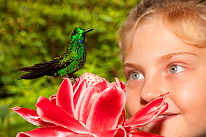 Girl watching Green-crowned Brilliant Hummingbird (Heliodoxa jacula) perched on flower. Captive. La Paz Waterfall Gardens, Poas, Costa Rica. Model released - Roland Seitre