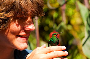 Boy looking at Green Crowned Brilliant Hummingbird (Heliodoxa jacula) perched on hand. Captive. La Paz Waterfall Gardens, Poas, Costa Rica. Model released - Roland Seitre