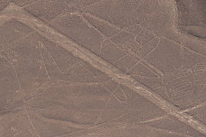 'The Whale', one of the patterns of the Nazca Lines. These are lines and patterns made around 300-600 AD by removing stones from the desert floor to expose the ground beneath. Their purpose remains un...  -  Roland Seitre