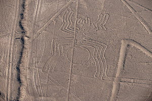 'The Spider', one of the patterns of the Nazca Lines. These are lines and patterns made around 300-600 AD by removing stones from the desert floor to expose the ground beneath. Their purpose remains u...  -  Roland Seitre