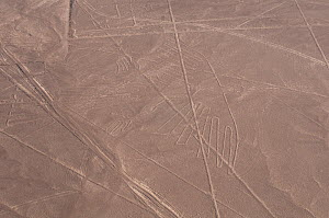 'The Condor', one of the patterns of the Nazca Lines. These are lines and patterns made around 300-600 AD by removing stones from the desert floor to expose the ground beneath. Their purpose remains u...  -  Roland Seitre