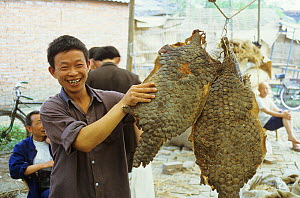 Man displaying a pangolin skins at traditional chinese medicine market. Pangolin scales are believed to cure fever. This trade is now illegal. Sichuan, Chengdu, 1983.  -  Roland Seitre