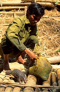 Reserve guard with confiscated animals, including a baby Malayan / Javan / Sunda Pangolin (Manis javanica). Nam Cat Tien, Vietnam, 1992.  -  Roland Seitre