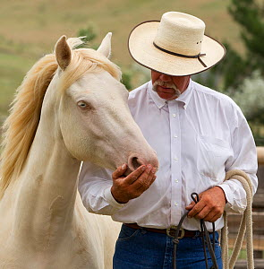 Trainer Rich Scott with Cremosso, a young male cremello Wild horse / mustang that had been rounded up from a McCullough Peak herd and put up for adoption, trainer teaching it to be led in paddock, Jul...  -  Carol Walker