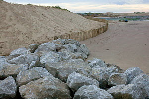 Boulders placed on the beach to encourage displacement of newly created sand dune by sea and thus raising level of beach in an attempt to reduce coastal erosion and protect Hightown village.  This man... - David Woodfall