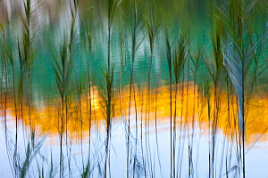 Abstract of reeds in front of lake with reflections, Plitvice Lakes National Park, Lika, Croatia, Europe, October 2011  -  Juan Carlos Munoz
