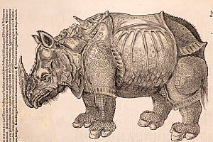 Illustration of Indian/Asian Rhinoceros (Rhinoceros unicornis), Gesner Woodcut from 'Icones Animalium' 1560, reproduced from 1551. Published Christoph Froschover, Zurich. Gesner reproduces this image... - Paul D Stewart