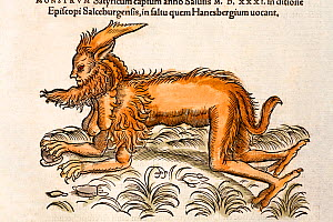 Woodcut illustration of mythical creature with contemporary colouring from 'Icones Animalium' Publ. Christof Froschover, Zurich, 1560. Gesner illustrates a creature captured in the forest of Hanesberg...  -  Paul D Stewart