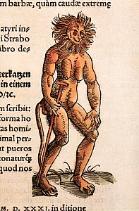Woodcut of mythical creature with early colouring from Conrad Gesner's 'Icones Animalium' 1557. Publ. Christof Froshover, Zurich. Gesner takes this image from Breidenbach's 'Journey to the Holy Land'...  -  Paul D Stewart
