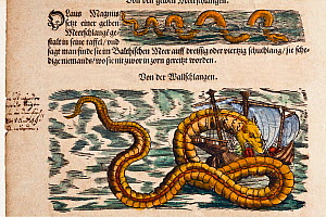 Illustration of Sea Serpents from Gesner's 'Historia Animalium', volume 4, 1558. Later hand colouring. Italic marginalia by contemporary scholar. Gessner's accounts included creatures which exist, and...  -  Paul D Stewart