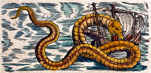 Illustration of Sea Serpents from Gessner's 'Historia Animalium', volume 4, 1558. Later hand colouring. Gessner's accounts included creatures which exist, and creatures which we now know do not. There... - Paul D Stewart