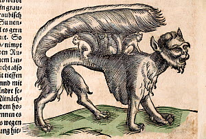 Illustration of mythical creature, The Su, 1627 woodblock engraving from Sebastian Munster's account of the New World from the Cosmographia. German edition of 1627 dealing with the navigation of Magel...  -  Paul D Stewart
