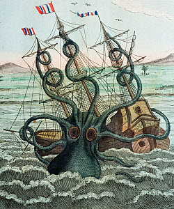 Illustration of Giant Octopus (Octopus dofleini) attacking a ship, 1815 copperplate engraving from Bertuch's 'Bilderbuch fur kinder' 16 plate 5. with contemporary colour. 'Colosal Polypus' (octopus) a... - Paul D Stewart