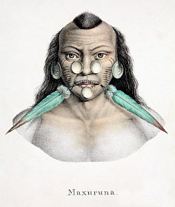 Illustration of tribal chief with Macaw (Ara sp.) feather ornaments. Early Lithographic print by Brodtmann, from Dr. Shinz, 'Naturgeschichte und Abbilldungen der Saugethiere' 1827/1840, with hand colo...  -  Paul D Stewart