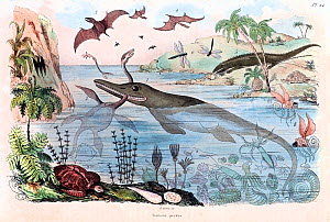 1834 steel engraving with contemporary hand colouring, the earliest coloured reconstruction of extinct fossil animals. It is from Guerin's Dictionnaire pittoresque Vol 1. plate 24. Numbered it include...  -  Paul D Stewart