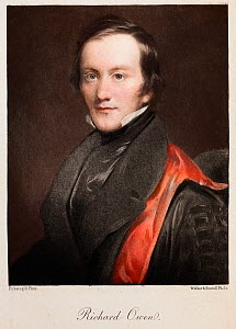 Portrait of Richard Owen (20, July 1804 - 18 December 1892), 1894 engraving from an 1840s painting by Pickersgill, later hand colouring. Owen was a comparative anatomist and palaeontologist. He coined...  -  Paul D Stewart