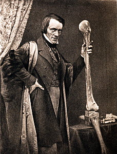 Portrait of Richard Owen and Moa leg (20, July 1804 - 18 December 1892) photo-engraved by Walker and Boutall around 1894 from an 1846 Daguerrotype. Owen was a comparative anatomist and palaeontologist...  -  Paul D Stewart