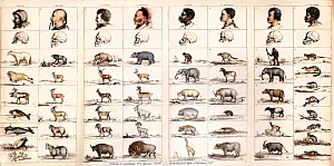 Tableau to accompany Professor Agassiz opening sketch on 'The provinces of the animal world and their relationship to the types of man'. From Dr. Josiah C. Nott and George Gliddon's 'Types of Mankind'...  -  Paul D Stewart