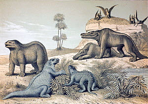 Lithograph with later hand colouring combining two of Benjamin Waterhouse Hawkins' six wall posters 'Waterhouse Hawkins Diagrams of the Extinct Animals' produced for the Department of Science and Art...  -  Paul D Stewart
