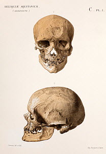 Chromolithograph illustration of Cromagnon 'Skull of an old man' Plate 1, Section C. Edouard Lartet and Henry Christy. 'Reliquiae Aquitanicae' 1865-1875, Williams and Norgate, London 1875. The type sp...  -  Paul D Stewart