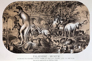 Illustration from Harpers Weekly, August 14th 1869 'Palaeozoic Museum, showing the rehabilitated forms of ancient animal life in america now being constructed in Central Park'. Wood cut from Benjamin...  -  Paul D Stewart