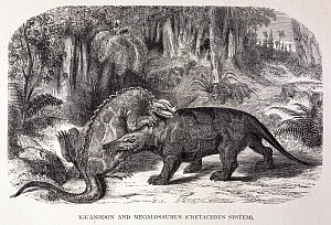 Illustration of iguanodon and megalosaurus by Riou in the revised English 1867 translation of Louis Figuier's 'Earth before the Deluge' 1863. The figure shows impressions after the collaboration betwe...  -  Paul D Stewart