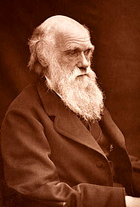 Photograph of Charles Darwin taken by his son Leonard around 1874 when Darwin was in his mid sixties. It appeared in 'Charles Darwin. A Paper Contributed to the Transactions of the Shropshire Archaeol...  -  Paul D Stewart
