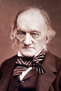 Photographic portrait of Richard Owen (20, July 1804- 18 December 1892). Woodburytype photograph by Lock & Whitfield published in 'Men or Mark' 1878. Owen was a comparative anatomist and palaeontologi...  -  Paul D Stewart