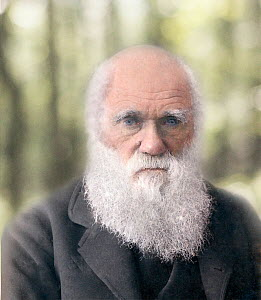 Hand coloured photograph of Darwin in old age by Paul Stewart based on the 1879 photograph by Elliot and Fry. According to Gene Kritsky, who maintains an archive of Darwin photographs, the Elliot and...  -  Paul D Stewart