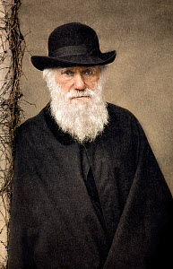Hand coloured image of Charles Darwin by Paul Stewart derived from the photograph of Darwin taken by Elliot and Fry in 1881 shortly before his death.  -  Paul D Stewart