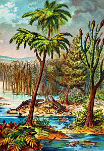 Illustration of Permian swamp showing Archegosaurus amphibians and Palaeoniscis fish among large Lepidodendron (2 right) and Sageneria (3 left) trees. Vivid colour lithograph from 'Dr. Schubert's Natu...  -  Paul D Stewart
