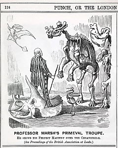 Cartoon from Punch, September 13th 1890 showing Professor Othniel Marsh standing atop a triceratops skull, with some of his famous discoveries before him. Top left Pteranodon (Marsh 1870) the first pt...  -  Paul D Stewart