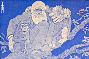 1909 illustration of Charles Darwin in tree with young chimpanzee (left) and orangutan (right) by the German artist Thomas Theodor Heine in the periodical 'Simplicissimus' 15th February 1909. This for... - Paul D Stewart