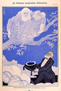 1909 'On Darwin's hundredth Birthday' Illustration of Charles Darwin in heavenly tree with young chimpanzee (left) and orangutan (right). Chromolithograph by the German artist Thomas Theodor Heine in... - Paul D Stewart