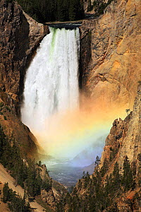 Lower Yellowstone Falls, Yellowstone river. These 33 meter high falls are the largest volume falls in the Rocky Mountains of the USA. The yellow rock around the river is a thermally degraded (hydrothe...  -  Paul D Stewart