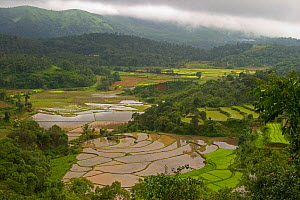 While mountain slopes are mostly used for plantations of coffee and tea, lowland areas are used to cultivate rice in paddy fields, which requires land that can retain water. Western Ghats, Karnataka,...  -  Sandesh Kadur