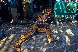 Men painted in the stripes of a tiger, dance through the streets of towns and villages paying homage at temples along the way as part of Huli Vesha, Tiger Dance, Western Ghats, Southern India  -  Sandesh Kadur