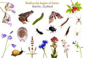 Composite of animals and plants found in Brechin, Angus, Scotland meetyourneighbours.net project  -  MYN / Niall Benvie