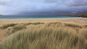 Marram grass (Ammophila Arenaria) blowing in wind in dune system, with sea in the background, Traigh Rosamol, Harris, Outer Hebrides, Scotland, UK, October  -  Peter  Cairns / 2020VISION