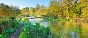 Panoramic view of the River Itchen, Ovington, Hampshire, England, UK, May. 2020VISION Exhibition. - Guy Edwardes / 2020VISION