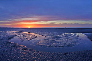 Mudflats at dawn, Sandyhills Bay, Solway Firth, Dumfries and Galloway, Scotland, UK, March. 2020VISION Exhibition.  -  Mark Hamblin / 2020VISION