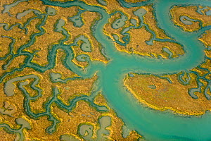 Aerial view of saltmarsh landscape, Abbotts Hall Farm Nature Reserve, Essex, England, UK, March 2012. 2020VISION Exhibition. Did you know? Salt marshes are great for removing and storing carbon dioxid...  -  Terry Whittaker / 2020VISION