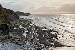 Scenic view of coastline and geology, Dunraven Bay, Glamorgan Heritage Coast, Wales, UK, December 2012. - Ross Hoddinott