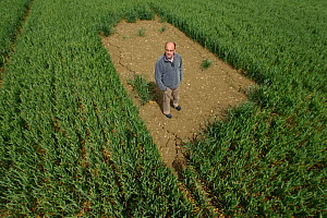 Farm manager Chris Bailey standing in skylark plot in Winter wheat crop, RSPB Hope Farm reserve, Cambridgeshire, England, UK, May 2011. Model released. 2020VISION Book Plate.  -  Chris Gomersall / 2020VISION