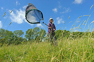 RSPB research ecologist Chloe Hardman using sweep net to sample invertebrate populations, RSPB Hope Farm reserve, Cambridgeshire, England, UK, May. Model released. 2020VISION Book Plate.  -  Chris Gomersall / 2020VISION