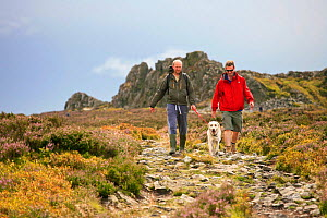 Two men walking a dog on moorland track, Stiperstones, Shropshire, England, UK, July. 2020VISION Book Plate.  -  John Beatty / 2020VISION