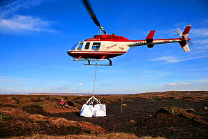 Helicopter dropping load of heather brash onto moorland. The heather provides a seed source from which to regenerate peat landscape, Kinder Scout NNR, Derbyshire, England, UK, July. 2020VISION Book Pl...  -  John Beatty / 2020VISION