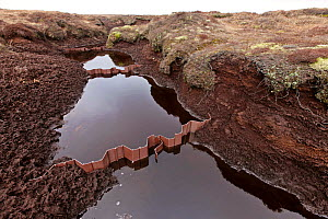 Plastic gully blocking structures used to help prevent erosion in peat moorland drainage channels, Kinder Scout NNR, Derbyshire, England, UK, July. 2020VISION Book Plate.  -  John Beatty / 2020VISION