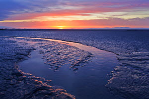 Mudflats at dawn, Sandyhills Bay, Solway Firth, Dumfries and Galloway, Scotland, UK, March. 2020VISION Book Plate. - Mark Hamblin / 2020VISION