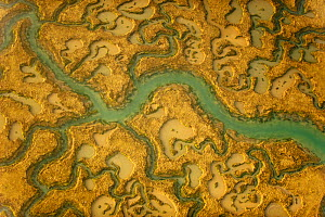 View of saltmarsh habitat from the air, showing tidal creek system, Abbotts Hall Farm, Essex, England, UK, March. 2020VISION Book Plate.  -  Terry Whittaker / 2020VISION